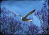 Flying Pigeon (gingerthree33@yahoo.com) Tags: pigeon flying bird sky trees jacarandatree clouds nature plane