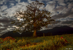 Mysterious tree (Jotha Garcia) Tags: mysterioustree nikkor180550mmf3556 nikond3200 junco asturias españa spain sky camp mountain tree nubes nocturna night jothagarcia herb luna moon roses largaexposición septiembre september verano 2017 summer principadodeasturias clouds landscape