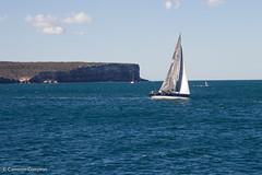 North Head Sail (Cameron (and Liz)) Tags: sydney harbor harbour sailboat sail sailing list listing people windsurf windsurfer point head cliff northhead ocean australia