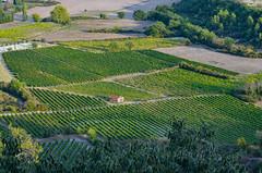 DSC_1270 (Matt_lcq) Tags: vigne vin gordes france vaucluse maison paysage extérieur cabane nature