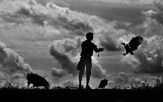 Le fauconnier by edouardketterer -