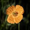 Sun Soaked (MrBlueSky*) Tags: flower petal garden nature plant horticulture outdoor colour kewgardens royalbotanicgardens london aficionados pentax pentaxart pentaxlife pentaxk1 pentaxawards pentaxflickraward