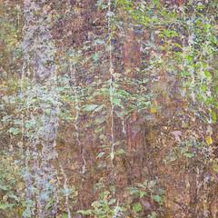 261/365 (Jane Simmonds) Tags: iphone multipleexposure woodland trees treebark ivy abstract 261365 3652017