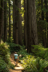 Hiking (Aaron Fredericy) Tags: redwoods redwoodsnationalpark redwoodsnationalforest hiking california green summer forestfire smoke pacificnorthwest pnw camping explore