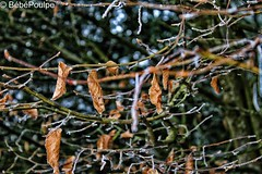 #2 (BebePoulpe) Tags: macro leaf autumn winter colorful hiver feuille orange