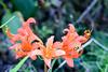 243/365 (Daegeon Shin) Tags: nikon d750 nikkor 55mmf28 flower flor lycorissanguineavarkoreana dof 365 니콘 니콘렌즈 꽃 백양꽃 심도