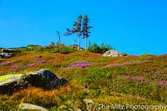 IMG_9830 (Photographie Maria) Tags: alm bergsee ennstal gipfel natur panorama reiteralm rippeteck schafe spiegelsee wandern ziege