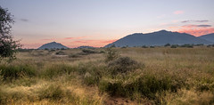 Pilanesberg landscape, South Africa (Knud Hald) Tags: 2017 africa entabeni fuji fujixt10withfujinonxf1855mmf284rlmois fujinonxf1855mmf284rlmois honeyuiderangerscamp knudhald limpopo outdoor pilanesberg pilanesbergsouthafrica2017 safari southafrica wildlife ngc fujix landscape beautiful nature naturewatcher naturelover 500v20fav nationalgeographicsociety