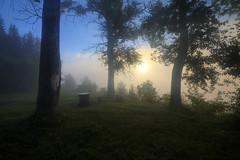 the morning fog (Sergey S Ponomarev - very busy) Tags: sergeysponomarev canon eos 70d nature natura landscape paysage paesaggio landschaft hdr highdynamicrange light morning sunrise woods forest fog russia kirov wjatka vyatka rest relax 2017 august north nord efs1018mmf4556isstm silhouettes сергейпономарев природа пейзаж утро рассвет солнце никульчино киров вятка деревья туман кировскаяобласть hoyafilters