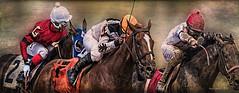 Making the Move!     ....(best enlarged) (jackalope22) Tags: horse race prairie meadows finish jockey