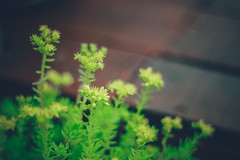 Nature Beauty (wolfphotogtaphy) Tags: nature natural micro macro macrolandscape microlandscape beauty scene green plant tree flower flowers sapa