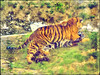 Wrestling Match (bethrosengard) Tags: bethrosengard photomanipulation digitallyenhanced photoart digitalmagic digitalart