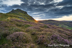 Last light (dtaylorphotography) Tags: british cheviots england evening greatbritain harthopevalley heather landscape nationalpark natural nature nnp nnpa northeast northumberland outdoors summer sundown sunset uk unitedkingdom