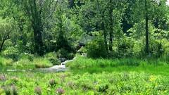 Vidéo: Une journée sur les berges du parc des Rapides, 20 août 2017 (lacostejm) Tags: zoneimportantespourlaconservationdesoiseaux refugedoiseauxmigrateurs rom zicoqc128 zico zicoquébec refugesd'oiseauxmigrateurs refugedoiseauxmigrateursdelîleauxhérons fleuvestlaurent rapidesdelachine secteurdoiseauxmigrateurs lasalle migrationbirdsanctury naturequébec migratorybirdsconventionact loide1994surlaconventionconcernantlesoiseauxmigrateurs lanatureenville balbuzardpêcheur amisduparcdesrapides colibriàgorgerubis martinpêcheurdamérique sternecaspienne cormoranàaigrettes goélandmarin goélandàbeccerclé bruantchanteur cardinalrouge amoureuxdusoleilparlöhstanadavid canonpowershotsx60hs magixvidéodeluxepremium