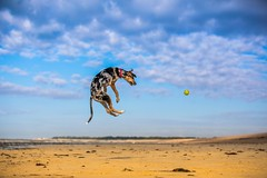 Air time Explored #70 (Paul M Loader) Tags: dog rescue air flying acrobatic canon eos 5d mkiv ef70200mm f28l is ii usm west beach littlehampton sussex uk sea sun water jumping