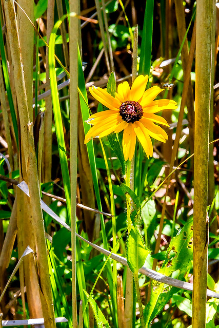Springfield Fen Nature Preserve / Galena Marsh - July 25, 2017