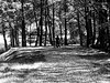Walk along a white stream_bw (ladic_1) Tags: walk white stream czech panasonic dmc fz50 photo