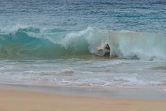 J68A6900-2 (patriciacorsiatto) Tags: hawaii2017 at beach
