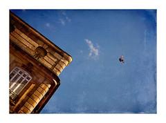 liberté (Marie Hacene) Tags: bordeaux ancien oiseau ciel sky france gironde