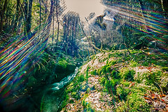 Tasmanian wilderness with a burst of sunlight (Theresa Hall (teniche)) Tags: australia canberra hobart nikond750 tasmania teniche theresa theresahall countryside plantation plants scrub trees waterfall wilderness water waterway burst sunlight sunburst burstphotography