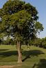 0F1A1582 (Liaqat Ali Vance) Tags: nature trees people gulshan iqbal park google lahore liaqat ali vance photography punjab pakistan