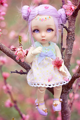 Cherry Tree ☆ (Shimiro Kestrel) Tags: bjd doll pukifee fairyland pkfante pukifeeante ante tiny tinybjd cute kawaii spring sakura flower nature portrait outside bjdphotography dollphotography bjdportrait bjdcustom fullcusto toyphotography abjd