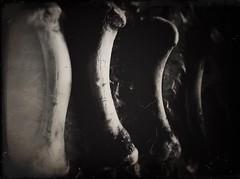Bone Garden-11285 (Poetic Medium) Tags: shadows stilllife organic rni blackandwhite kitcamghostbird snapseed ipod bones food