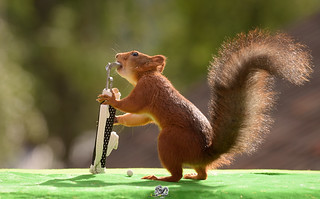 squirrel taking out a Golf Club
