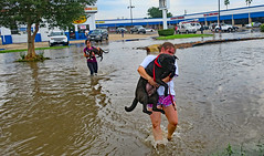 Rescuers (Ellsasha) Tags: rescue rescuers dogs canines flood floods flooding evacuations animals water streetflooding