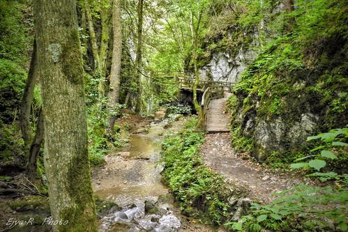 By the stream /Patak mentén
