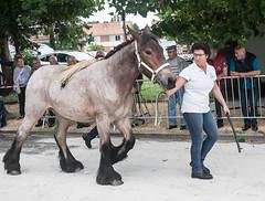 Wemmel, Jaarmarkt 2017 #9 (foto_morgana) Tags: belgique belgium belgië horse jaarmarkt2017 mammalia mammals mammifères outdoor säugetiere wemmel zoogdieren animal