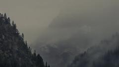 I love Trees, Mountains and Fog (Netsrak) Tags: baum bäume berge gebirge alpen kleinwalsertal natur schnee regen