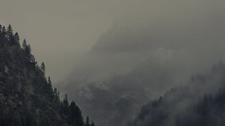 I love Trees, Mountains and Fog