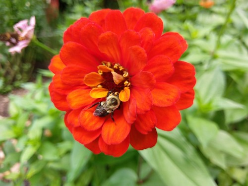 Summer Flower and Bee