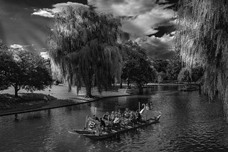The Swan Boats in Boston Public Garden
