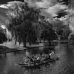 The Swan Boats in Boston Public Garden thumbnail