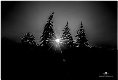 AUGUST 2017 NM1_4677_906-223 (Nick and Karen Munroe) Tags: beauty brampton beautiful brilliant blackandwhite bw blackwhite bandw munroedesignsphotography munroedesigns munroephotography munroe nikon nickmunroe nickandkarenmunroe nature nickandkaren nikond750 karenick23 karenick karenandnickmunroe karenmunroe karenandnick karen ontario outdoors ontariocanada canada sun sunlight summer sunset sunsetting dusk d750 monochrome mono