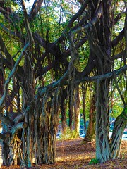 "The Cairns Esplanade-Spring • <a style=""font-size:0.8em;"" href=""http://www.flickr.com/photos/146187037@N03/36929626452/"" target=""_blank"">View on Flickr</a>"