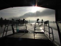 Hunting for stinkbait (Sun T'zu) Tags: sturgeon bc fishing canada dinosaur river fraserriver catchandrelease sportfishing