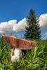 Mushroom (w.lichtmagie) Tags: pilz strobist strobistinfo canonefs1585 wiese himmel herbst baum mushroom meadow tree autumn grün drausen green outdoor blue wolken sky clouds ngc closeup