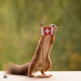 squirrel holding a flag of Switzerland