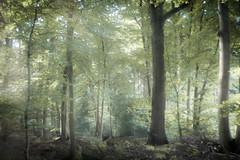 ... love the Forest (ursulamller900) Tags: pentacon2829 wald forest landscape landschaft herbst autumn