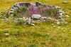 20170804 Switzerland 07225 -1 (R H Kamen) Tags: swissalps switzerland valdebagnes valaiscanton verbier alpine flower mountain nature rhkamen scenics summer valais
