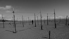 Caught (tobymeg) Tags: sand scotland nets sky cloud poles mono0 solway coast beach panasonic dmcfz72