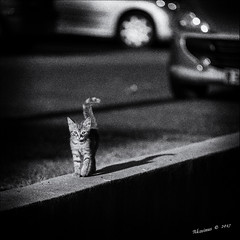 Street Kitten !!! (Alcosinus  ON/OFF ) Tags: alcosinus nikond700 carrée square bw chaton sreetkitten ombre shadow bokeh