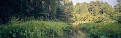 On Film - Wetlands Panaroma 1 (Neal3K) Tags: newmanwetlandscenter georgia wetlands kodakektar100 120film