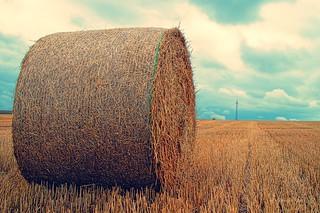 straw bales / Strohballen