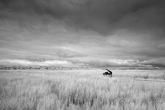 A grand view - Snape, Suffolk (Justin Minns) Tags: reeds piano mono snape suffolk ir