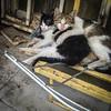 Batha Kittens (Kyre Wood) Tags: batha riyadh kingdom saudi arabia feral street kittens