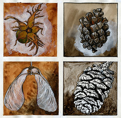 Sketchbook ideas (Martin Blunt) Tags: reship pinecone sycamore seed sketches watercolour observational drawings paintings tipex indianink goouache white backgrounds
